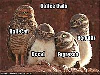 Click image for larger version.  Name:funny-coffee-owls.jpg Views:152 Size:44.1 KB ID:7254